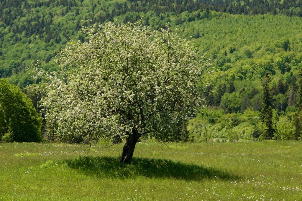 tree_upham